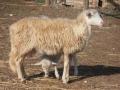 Una delle nostre pecorelle